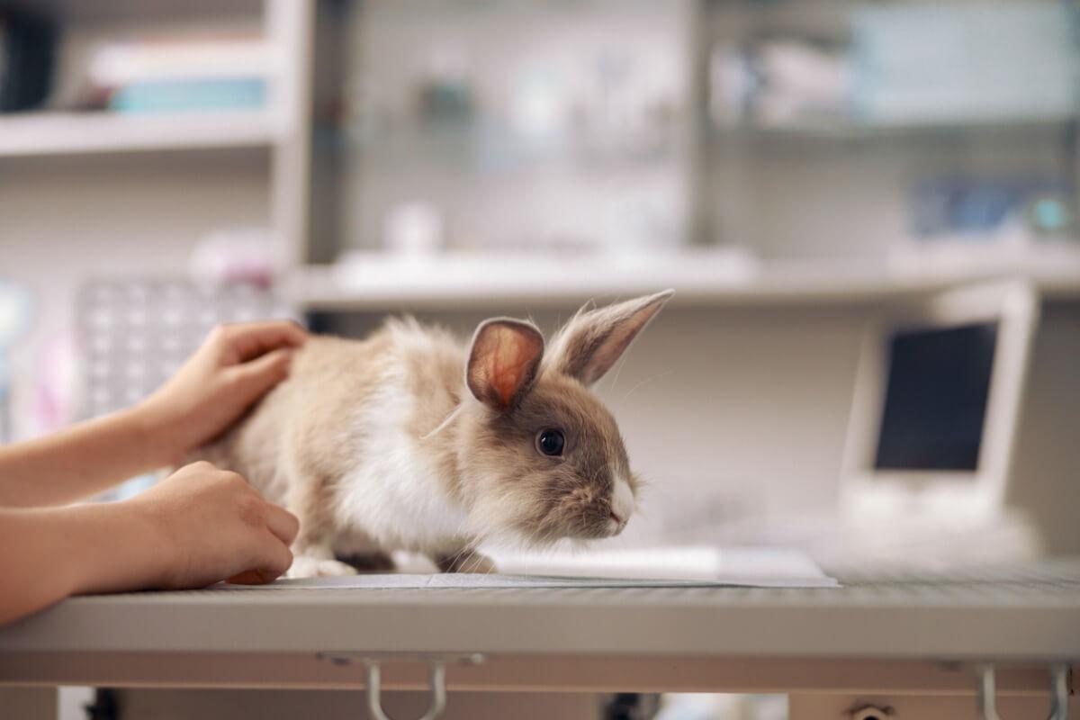 Een konijn op tafel