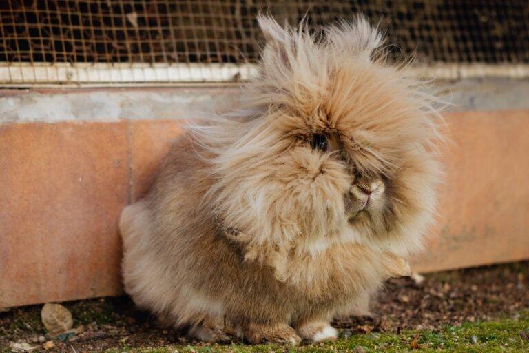 Bolas de pelo en el estómago del conejo: ¿qué hacer?