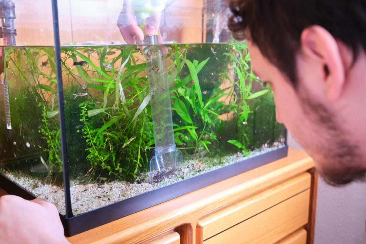 El agua verde en el acuario representa un sobrecrecimiento algal.