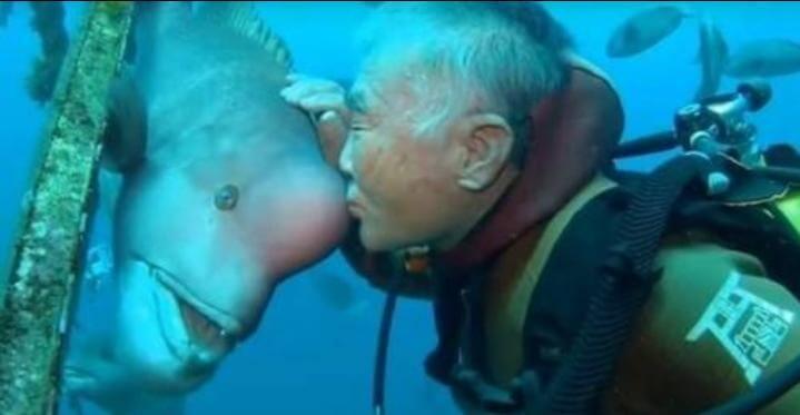Cada año un hombre visita al extraño pez que le salvó la vida