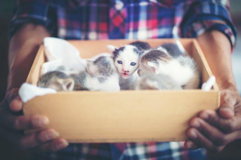 ¿Cómo eliminar las pulgas en gatos recién nacidos?