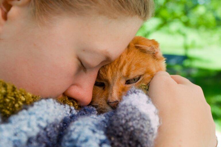 7 enfermedades mortales en gatos