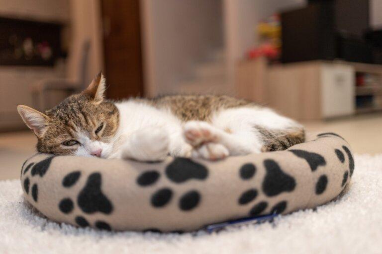 ¿Dónde debe dormir tu gato?