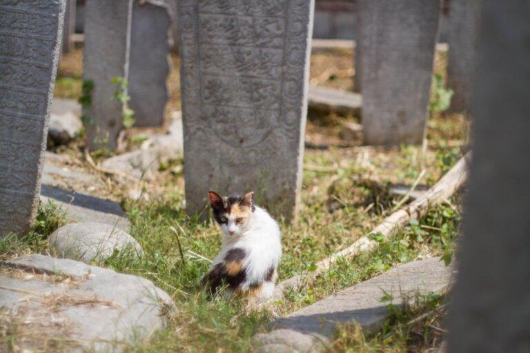 12 síntomas de que un gato va a morir