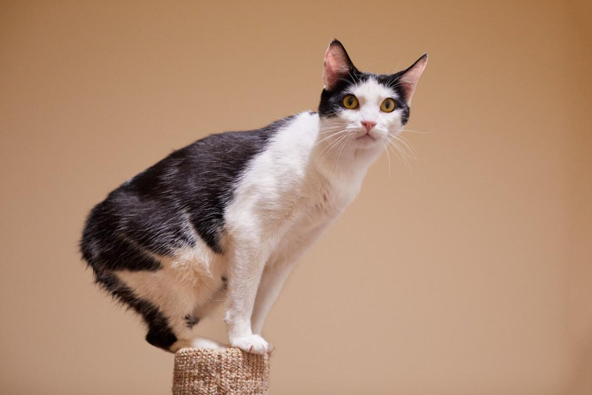 Uno dei gatti a cui piace l'acqua