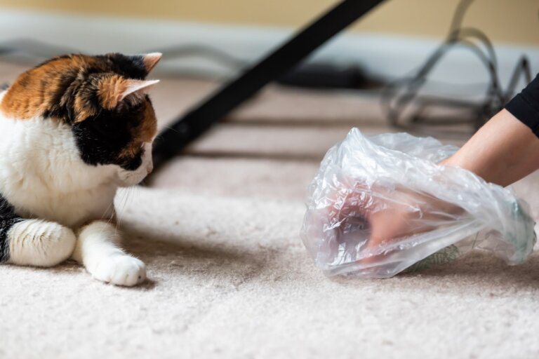 ¿Qué hago si mi gato deja de usar el arenero?