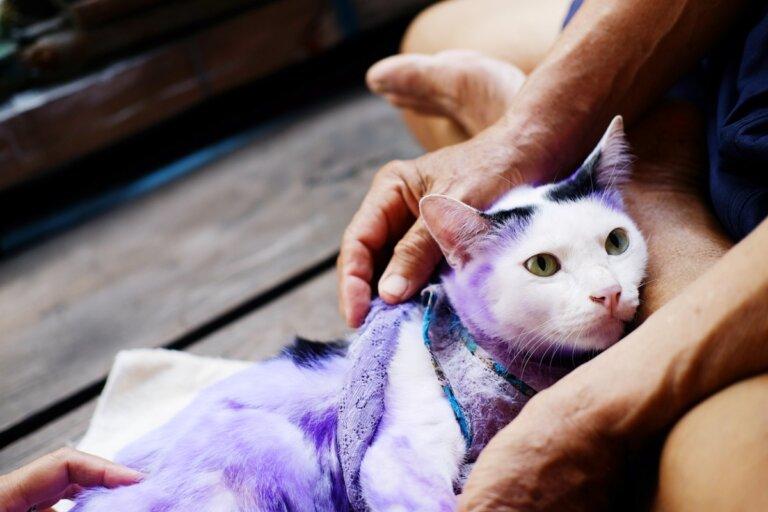 15 cosas comunes que podrían matar a tu gato