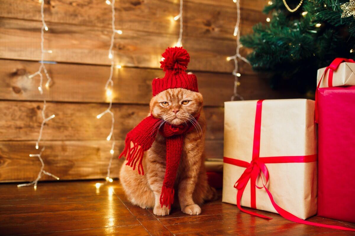 Un chat habillé pour Noël.