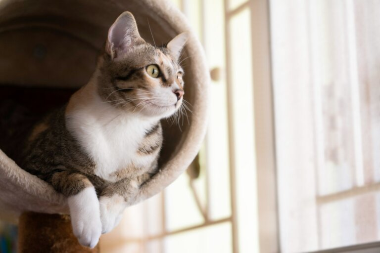 ¿Cómo hacer un gimnasio casero para gatos?