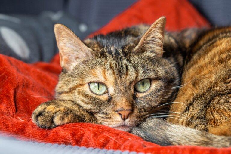 Los gatos también pueden sufrir problemas por separación