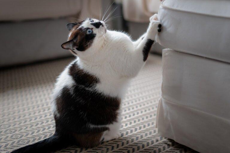 ¿Cómo evitar que tu gato trepe en tus muebles?