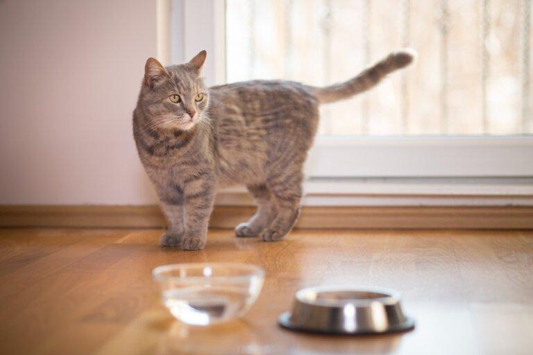 ¿Por qué mi gato bebe agua con su pata?