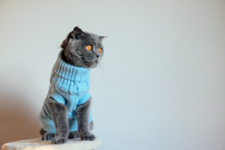 ¿Por qué no se le debe poner ropa a los gatos?
