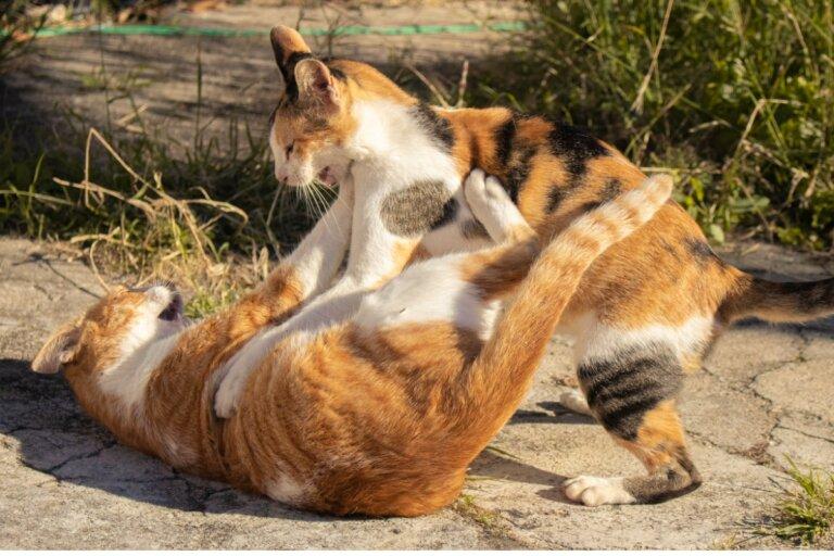 ¿Cómo separar a dos gatos que están peleando?