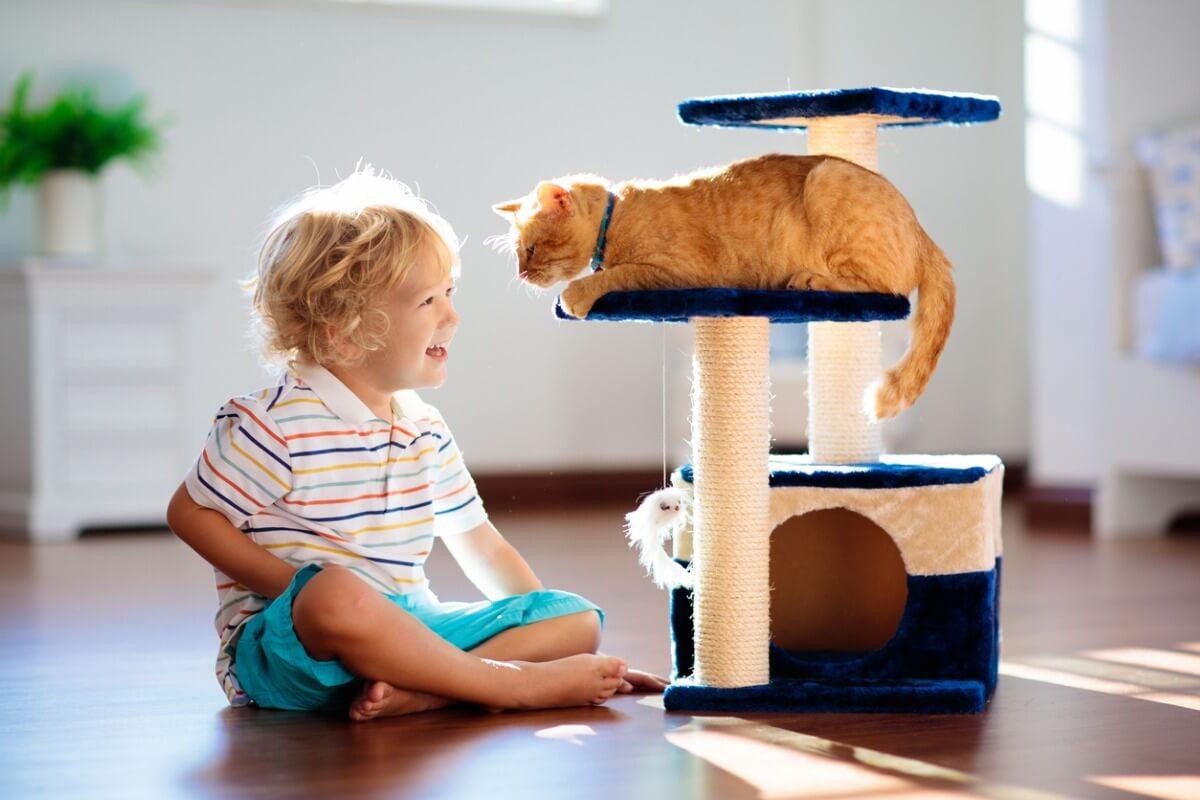 Un ejemplo de gimnasio para gatos.