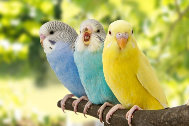 5 signos de que tu pájaro está contento