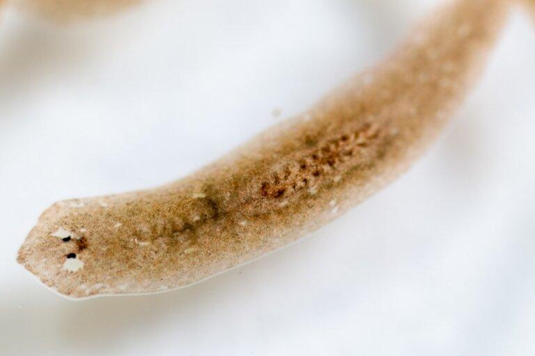 ¿Por qué hay gusanos en mi acuario?