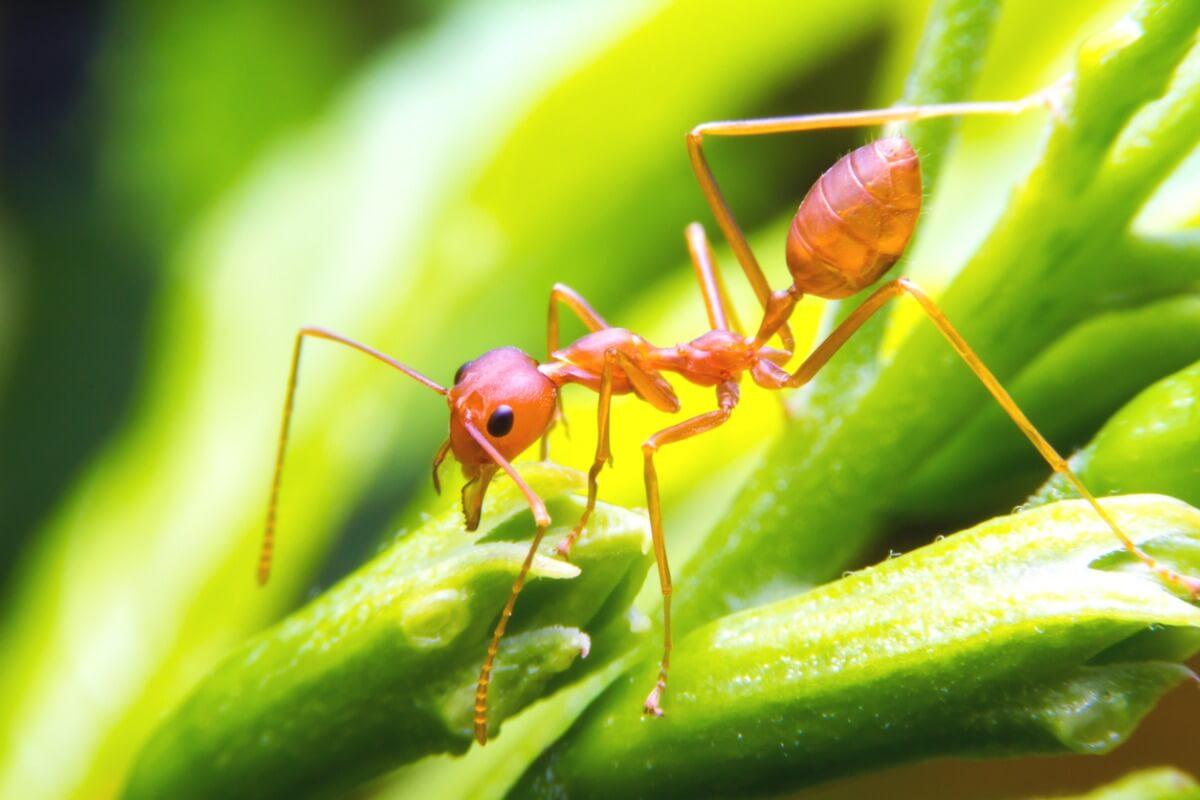 En myra.