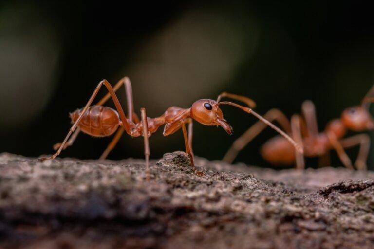 ¿Las hormigas duermen?