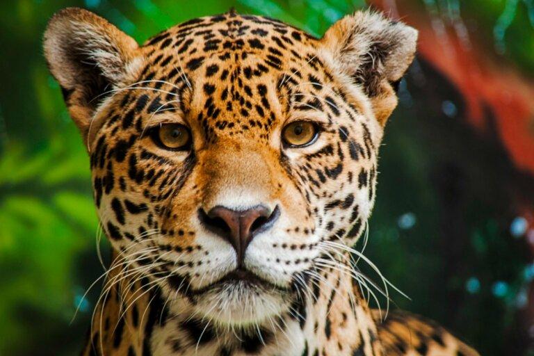 Los 15 animales más peligrosos del Amazonas