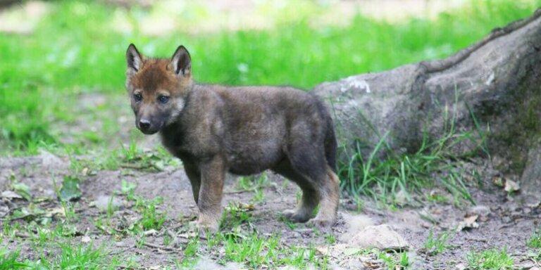 En Alemania senderistas encuentran un cachorro y les confirman su sospecha más temida