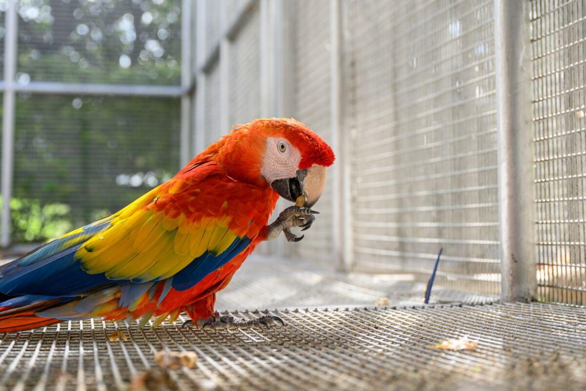 I pappagalli possono mangiare le uova?