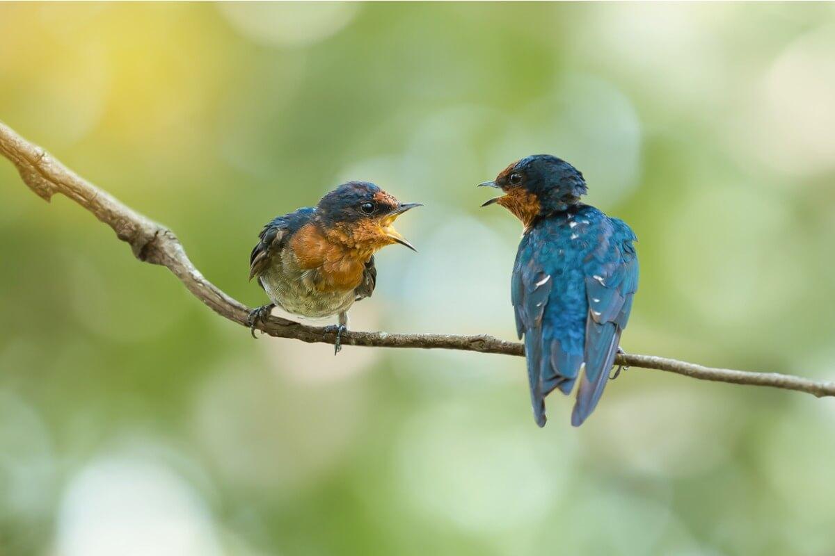 8 signos de que un pájaro va a morir
