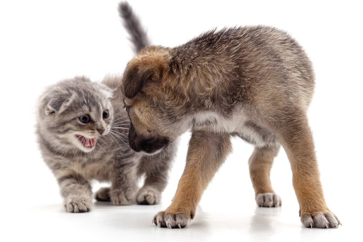 Una pareja de un gato y un perro sobre un fondo blanco.