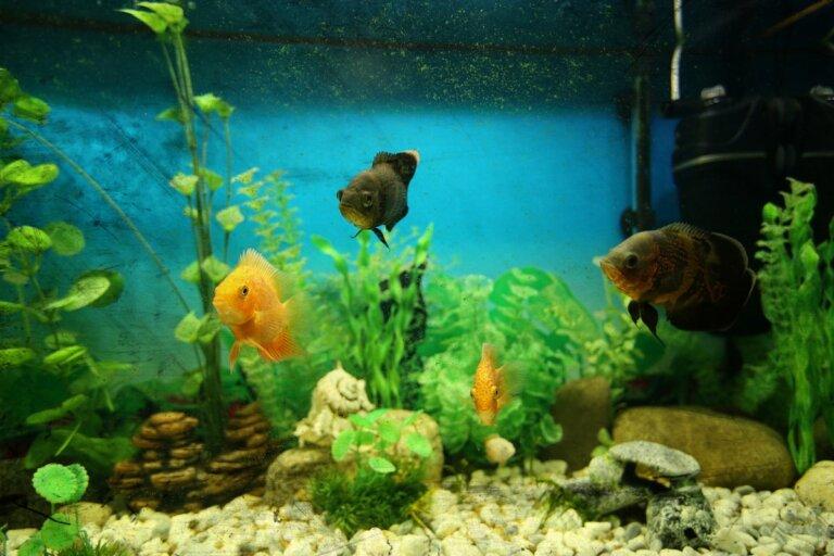 Agua turbia en el acuario: causas y soluciones