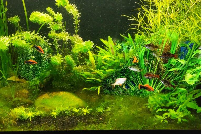 Mi acuario huele mal: ¿a qué se debe?
