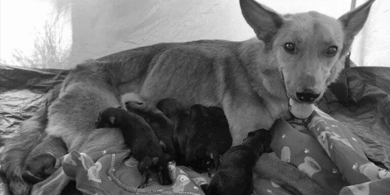 Viaje termina en tragedia cuando se van de camping con su perra recién parida