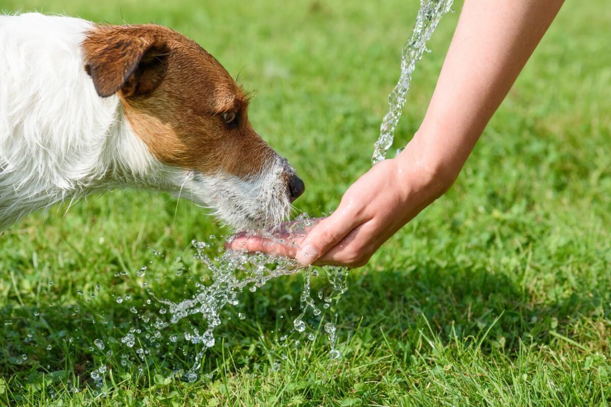 La cantidad de agua en perros es esencial para su bienestar.