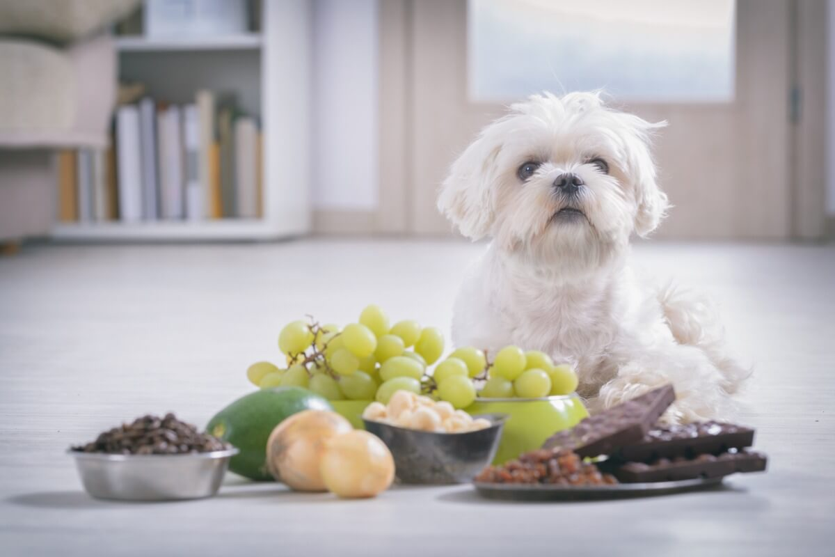 ¿Los perros pueden comer nueces?