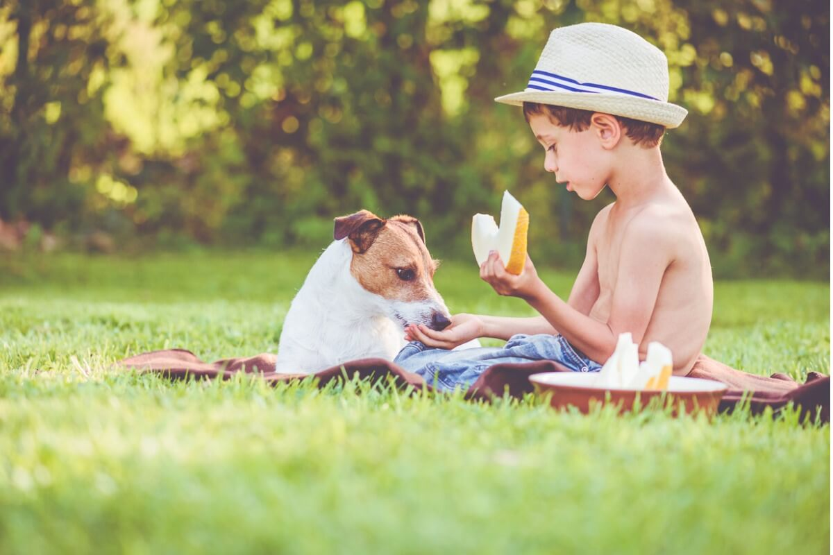 Un cane mangia melone con un bambino.