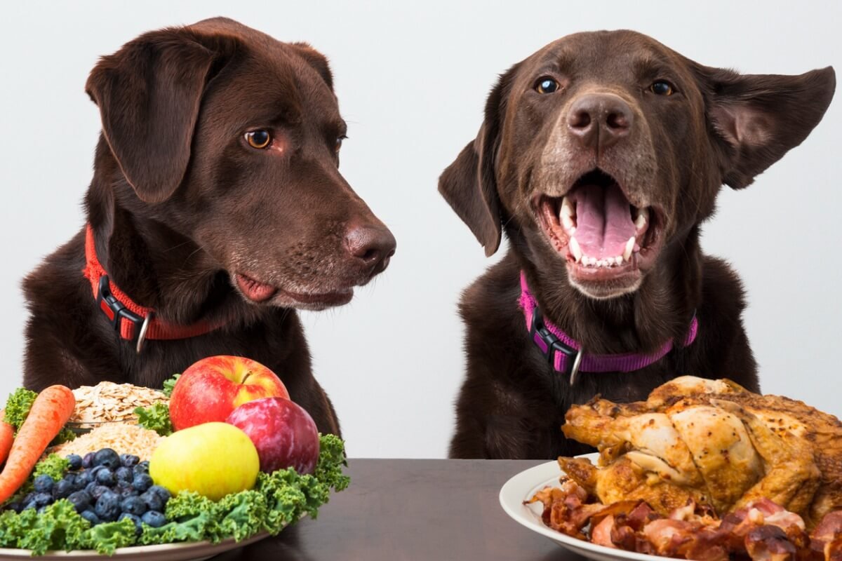 Quelle quantité de légumes est bonne pour un chien ?