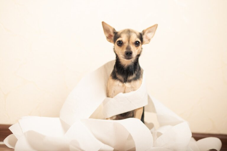Diarrea por clostridium en perros: síntomas y tratamiento