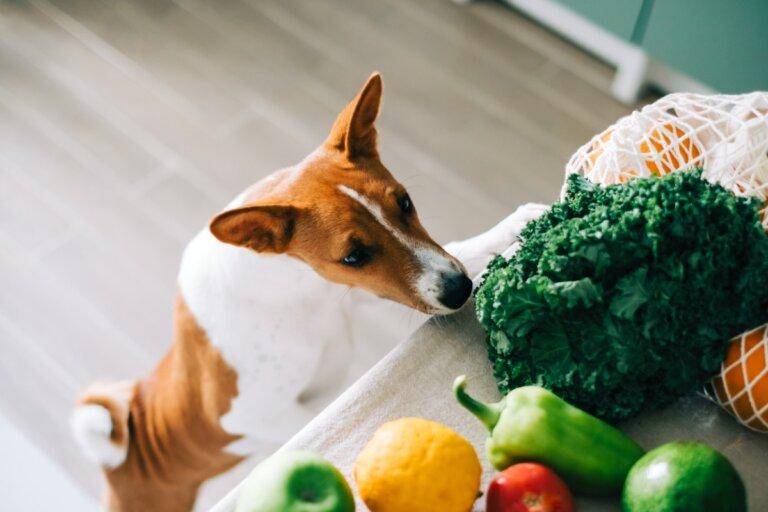 ¿Los perros pueden comer espinacas?