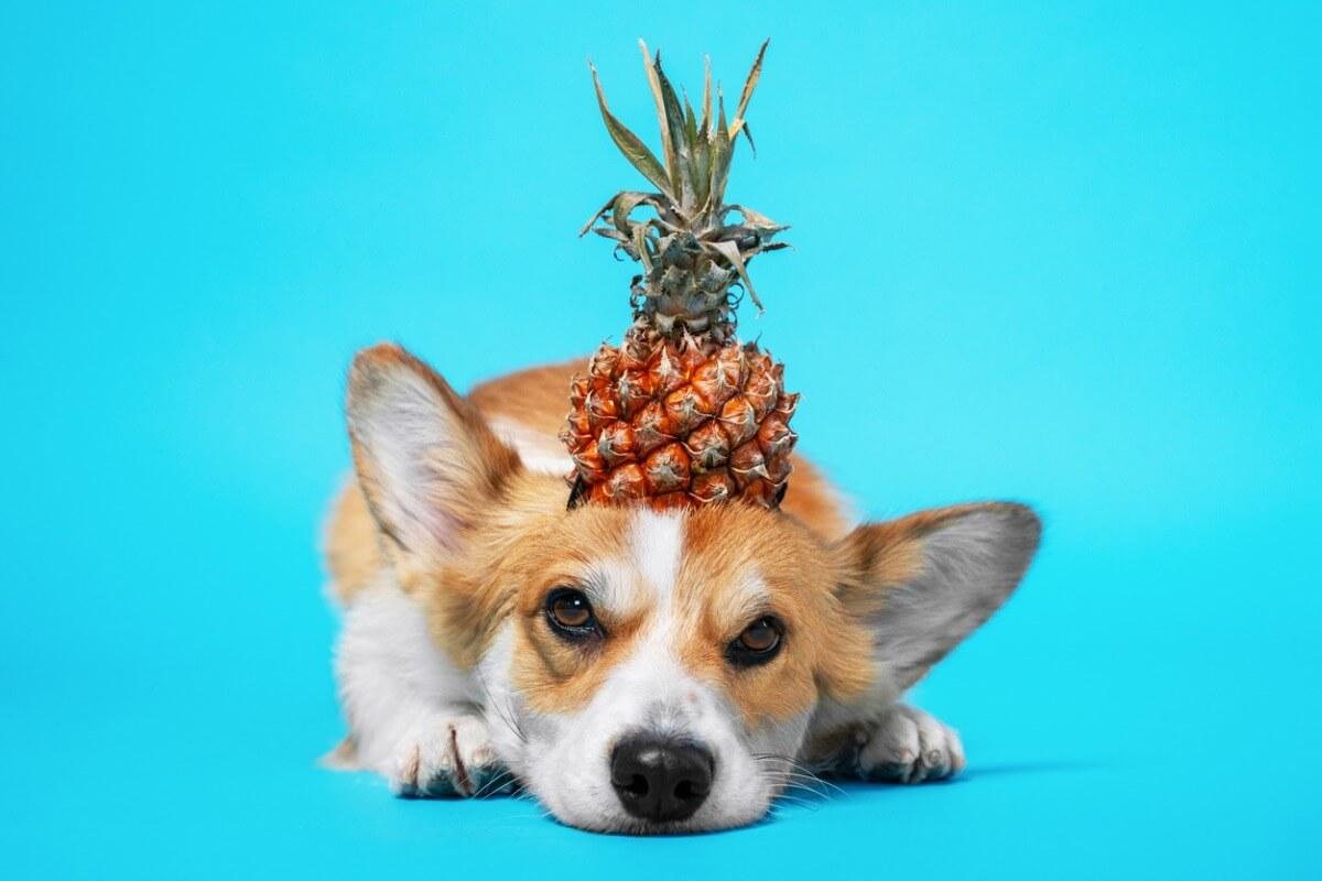 ¿La piña es buena para los perros?