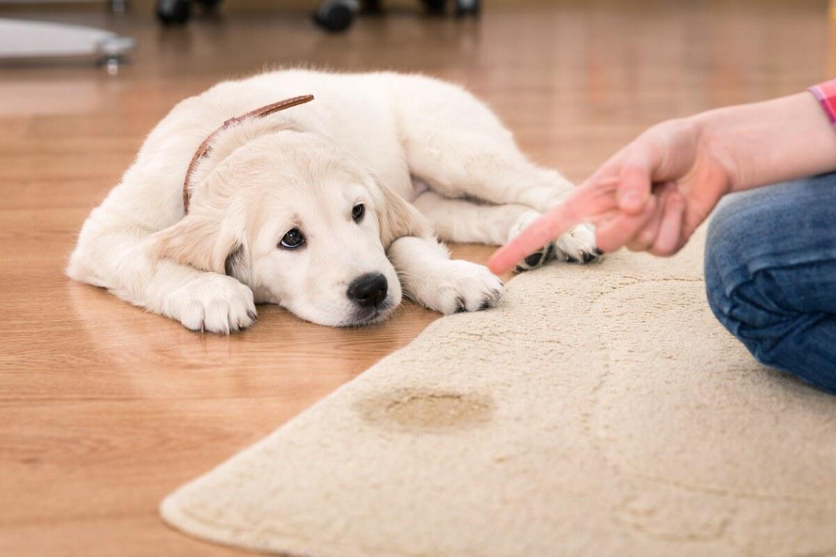 Los repelentes para perros ayudan a que no se hagan pis.