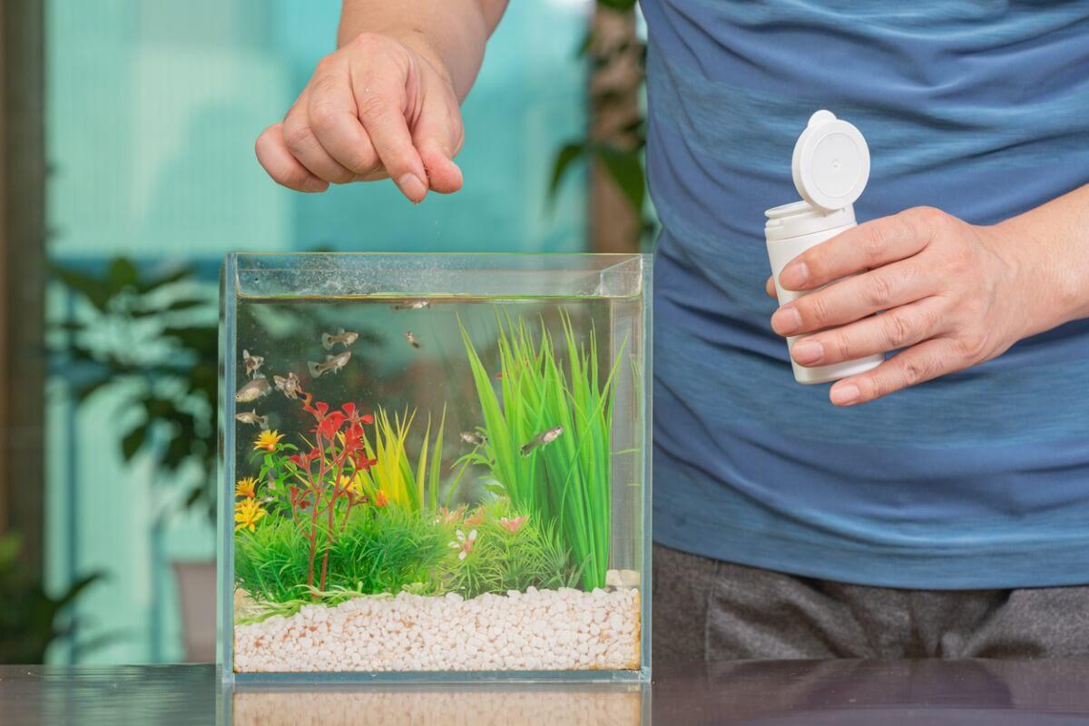 Une personne nourrissant son poisson.