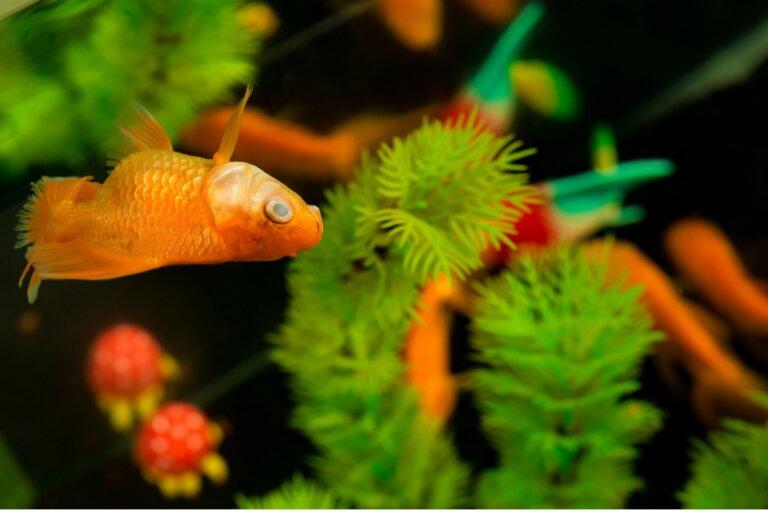 ¿Por qué se mueren los peces de mi acuario?