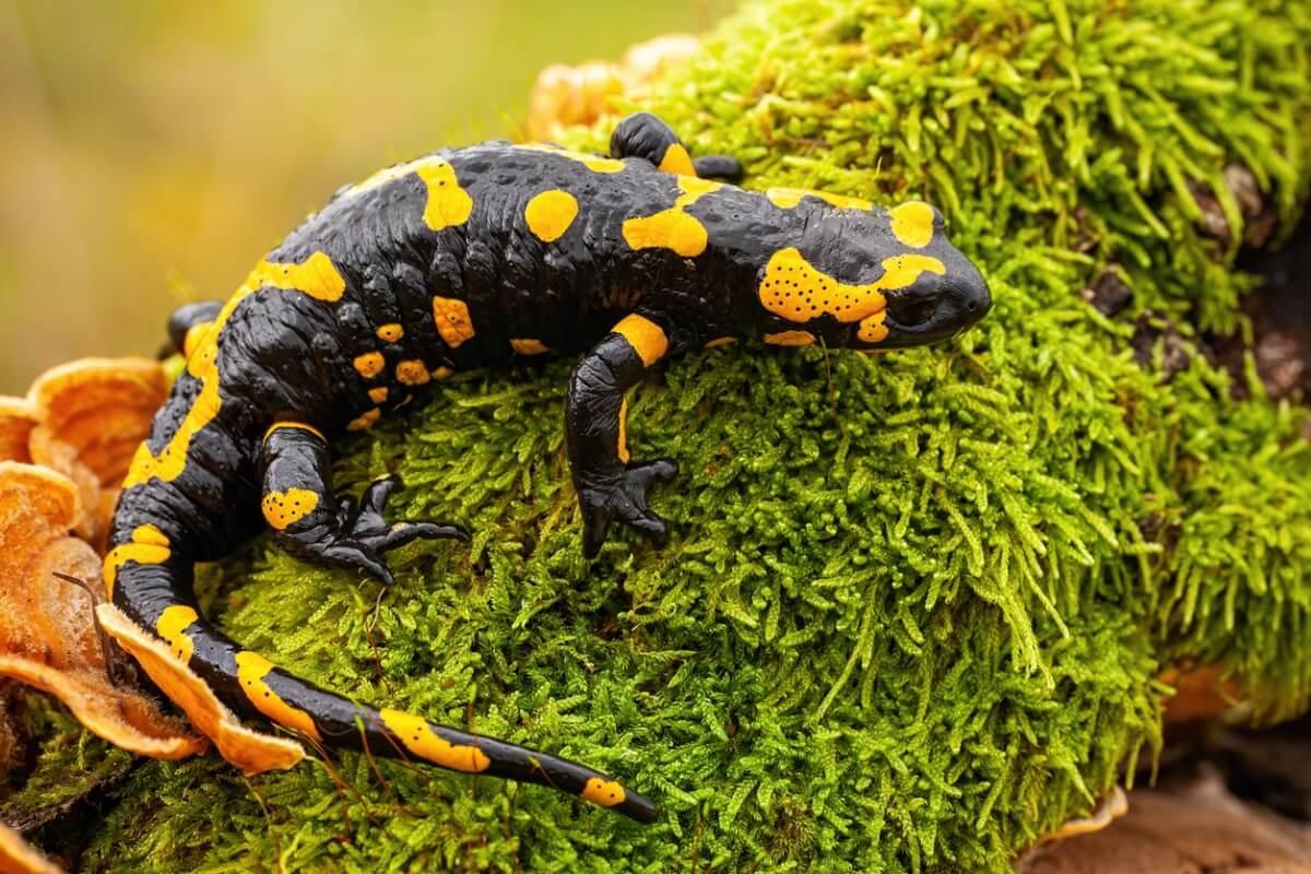 Una salamandra appollaiata sul muschio.