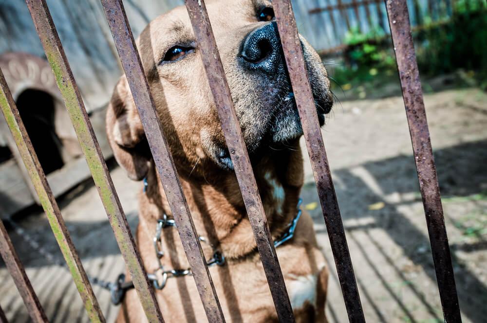 Prácticas peligrosas e ilegales para las mascotas