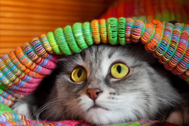 12 síntomas de que tu gato está estresado