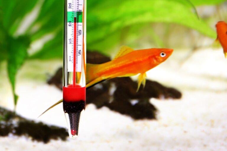 ¿Cuál es la temperatura ideal de un acuario de agua dulce?
