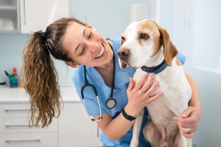 Trastornos del páncreas en perros