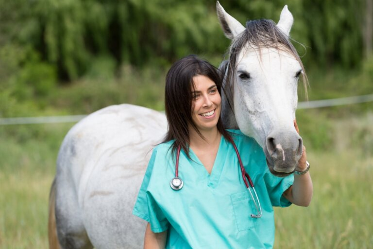 Enfermedades por inmunodeficiencia en caballos