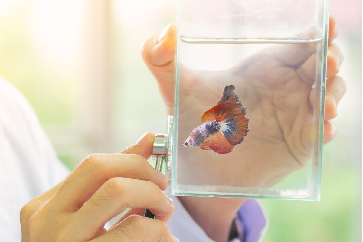 Un vétérinaire surveille un poisson.