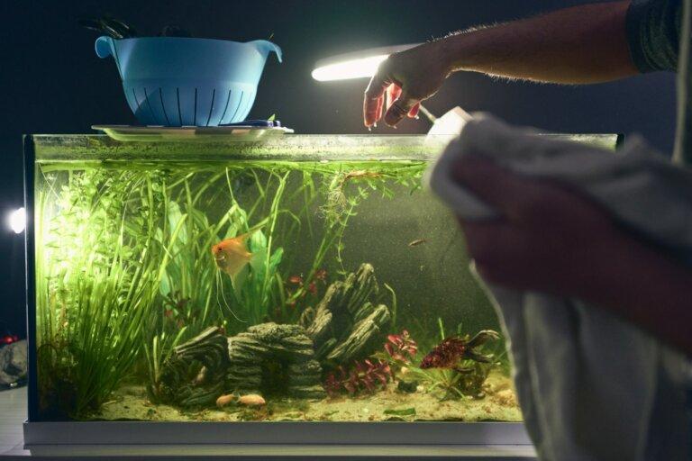 ¿Cómo iluminar mi acuario?