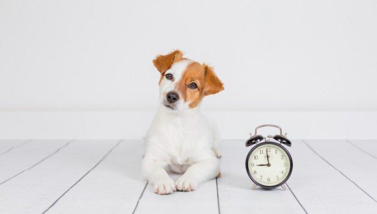 8 cosas que debe aprender un cachorro en su primer año